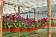 Где в орле купить рассаду цветов